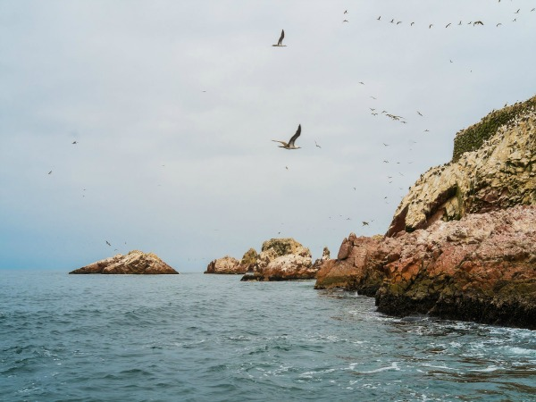 Wildlife in Islas Ballestas Peru