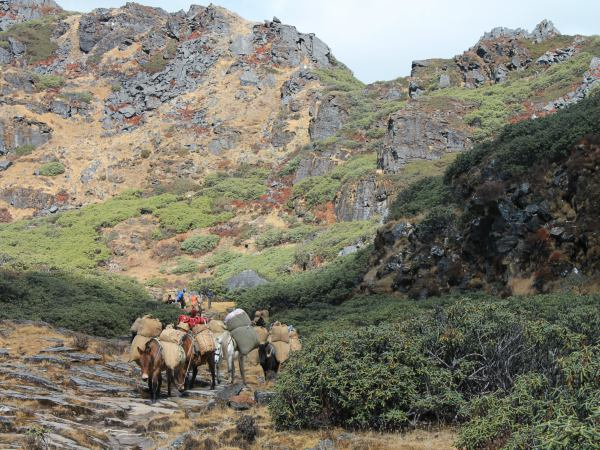 Horses on the druk path trek in bhutan