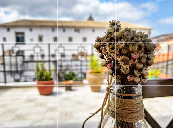Photography Tips - Rule of thirds flowers in Salvador Brazil