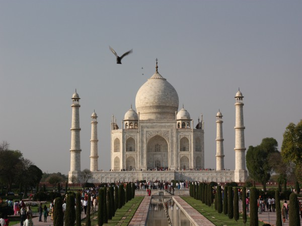 Bird flying in front of the Taj Mahal - India