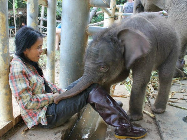 Lek Chailert with elephant in Thailand