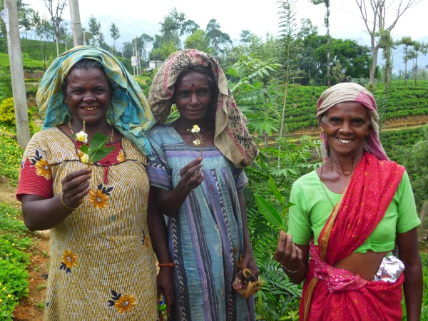 Local tea pickers in Sri Lanka