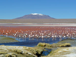 Flamingos by a lake in the Atacama