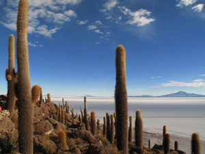 A cactus island in the Bolivian Salt flats