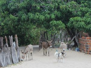 Animals in Atins, Brazil