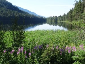 Meadows with flowers in Wells Gray Park