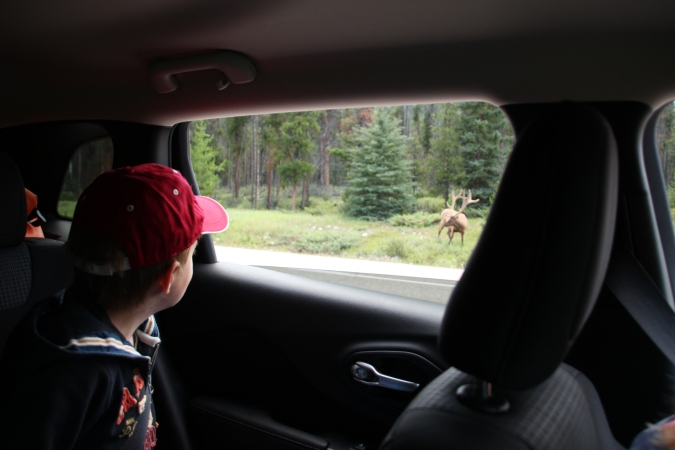 boy looking out of car window canada