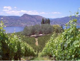 The View of a Vineyards