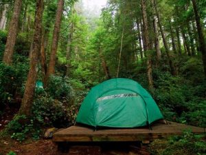 A tent in the middle of a forest
