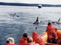 customers on whale watching trip victoria canada