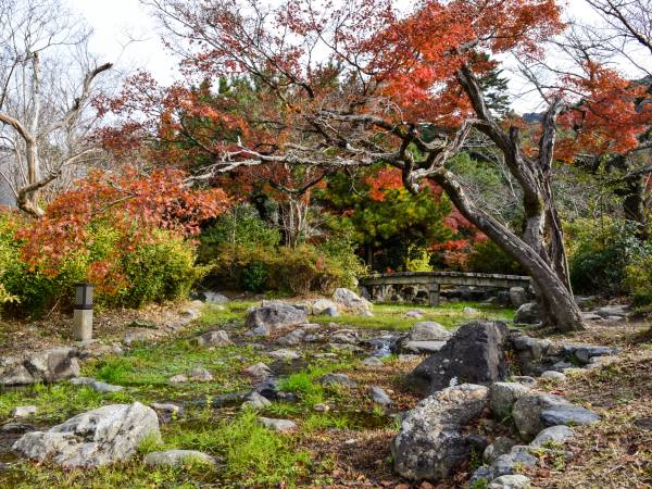 Japan trees and rock garden in Autumn.