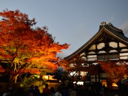 Landscape of a Japanese temple with a big iluminated tree