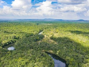 birds eye view of jungle