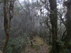 Misty Cloud Forest of San Gerado de Dota