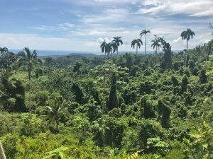 Jungle views from hiking trail