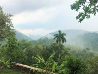Las Terrazas Jungle view, palm frees