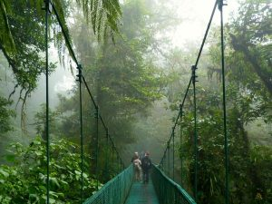 Canopy bridge cloud forest Monteverde