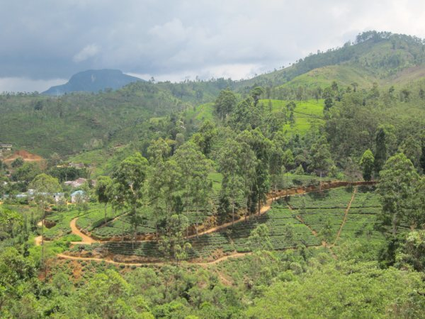 The countryside en route to Adam's Peak