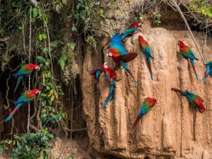 Wild parrots sitting on wall