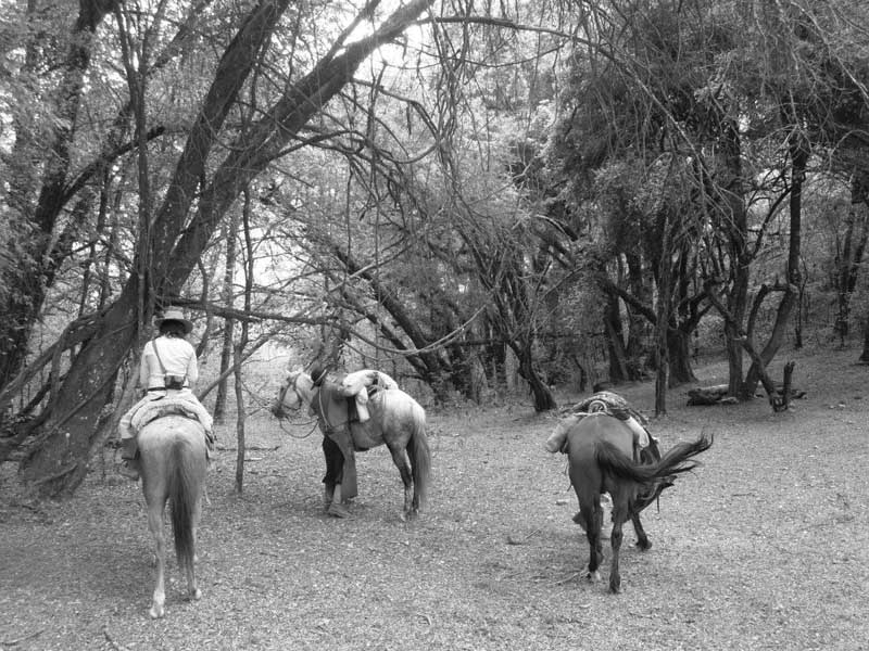 horses with riders in woods