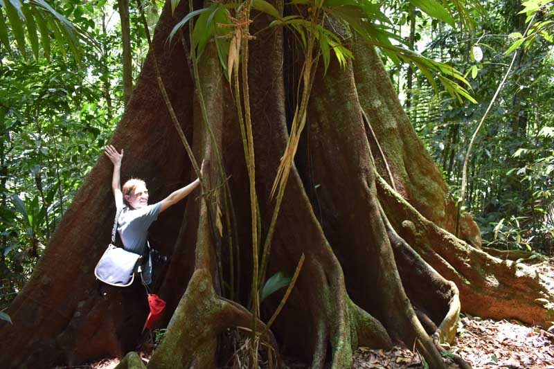 Woman standing in front of big tree trunk