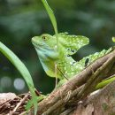 Green lizard resting on tree