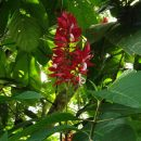 Red coloured flower