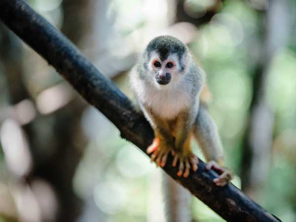 Rainforest monkey sitting on tree