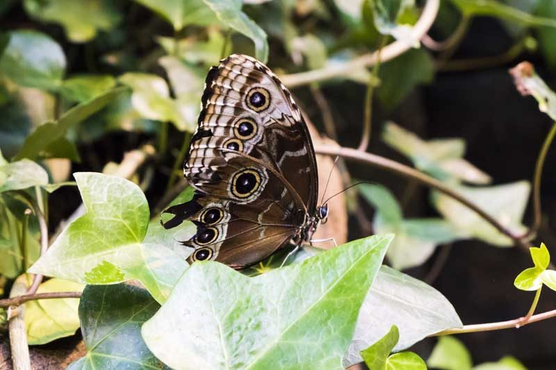 Butterfly sitting in leaves