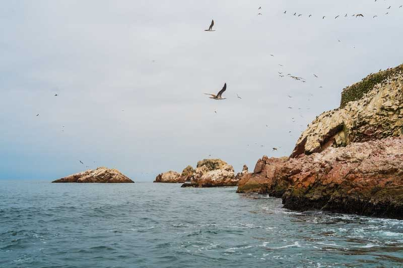 islas ballestas national reserve in paracas, peru