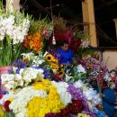 Flower market in Cusco Peru