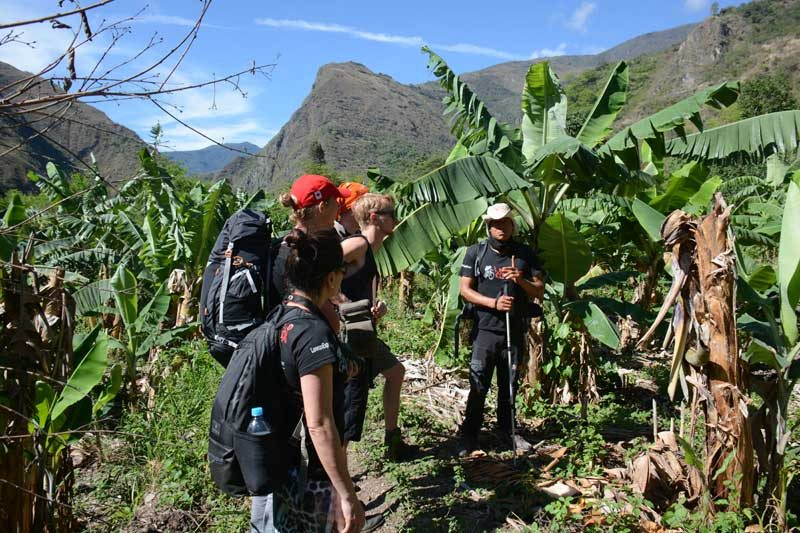 Peru - Trails - Guide - Group - Greenery