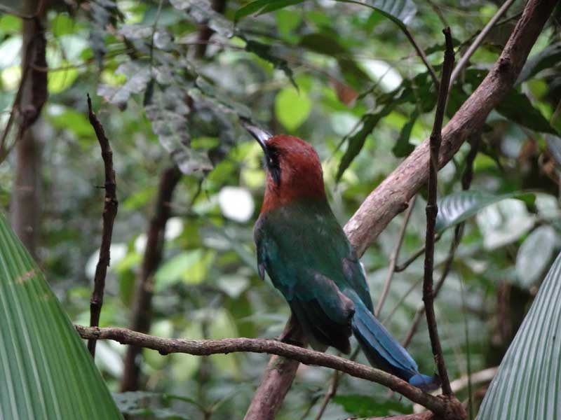 Red and green bird perching on branch