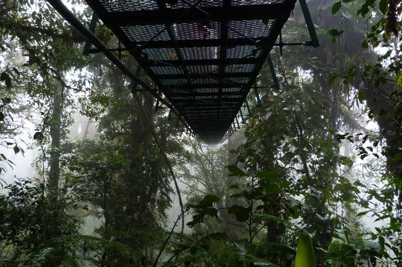View of underneath the canopy tour