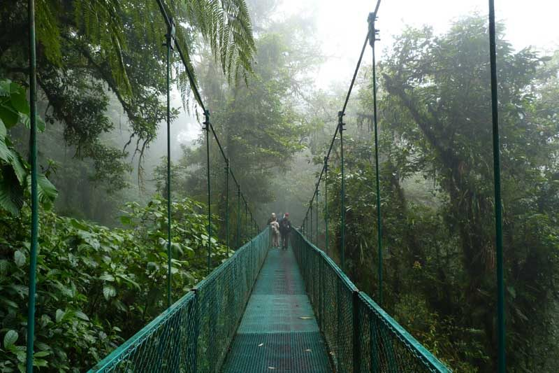 Canopy bridge going across the jungle