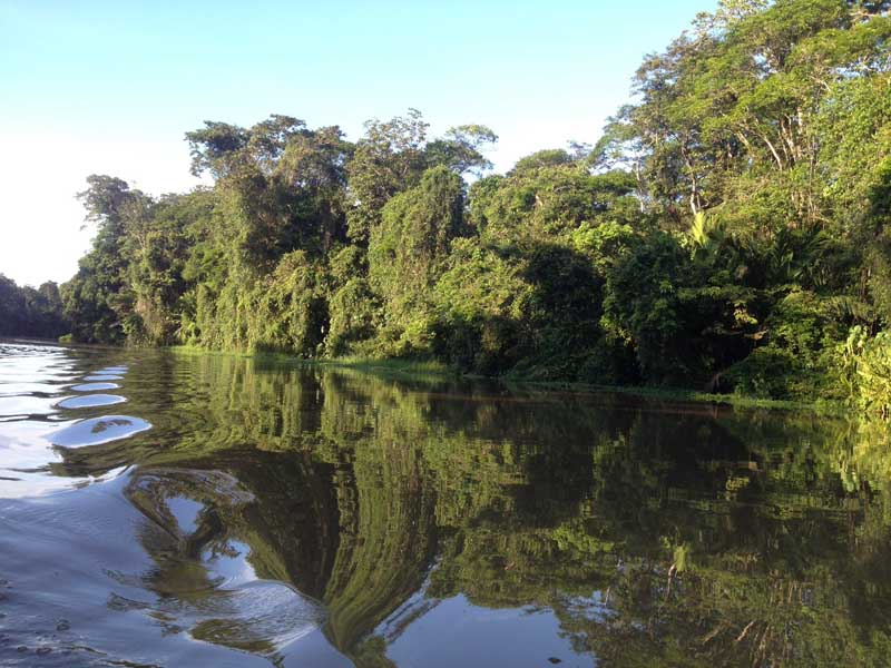 Tortuguero river with trees