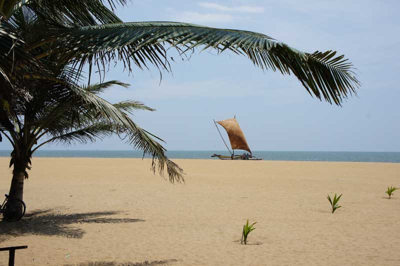 sandy beach with palm tree and sail boat