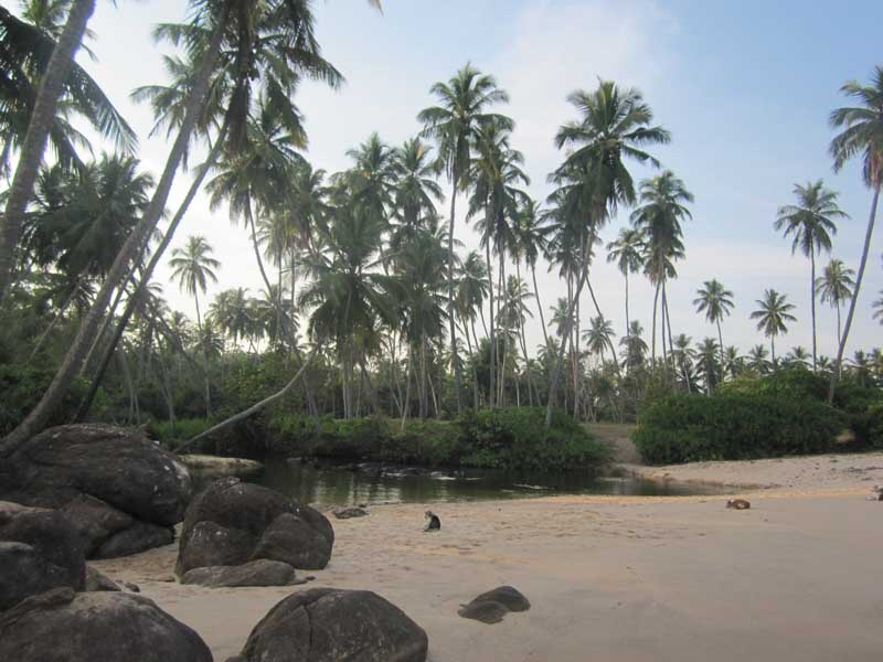 Sand beach with palm trees and rocks