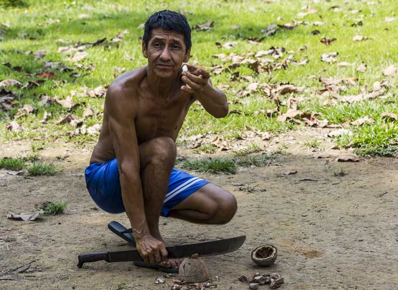 A local showing a brazil nut in the Amazon