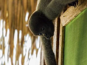 Monkey in the Amazon rainforest