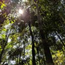 Amazon rainforest tree canopy