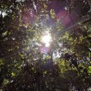 Amazon tree canopy with sunrays