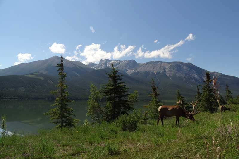 Mountains and lake with stag on grass