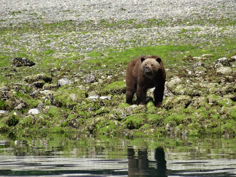 grizzly bear on grass near water