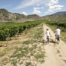 2 people cycling through a vineyard