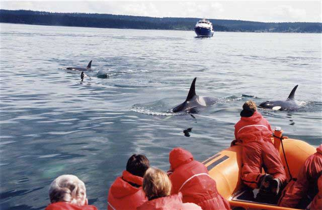 People on whale watching boat tour