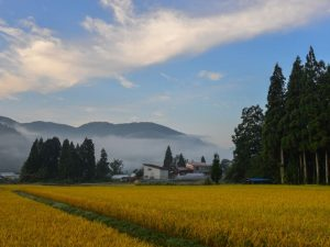 Rice field with small village in Akita