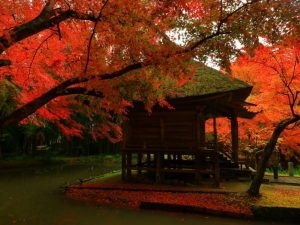 Japanese temple amidst autumn leaves