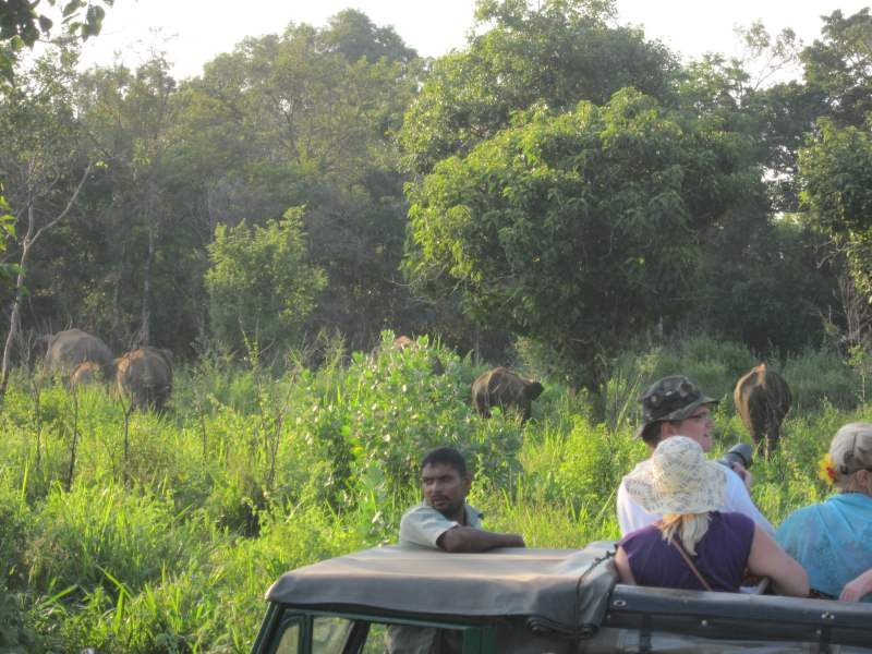 Jeep safari with people watching wild elephants