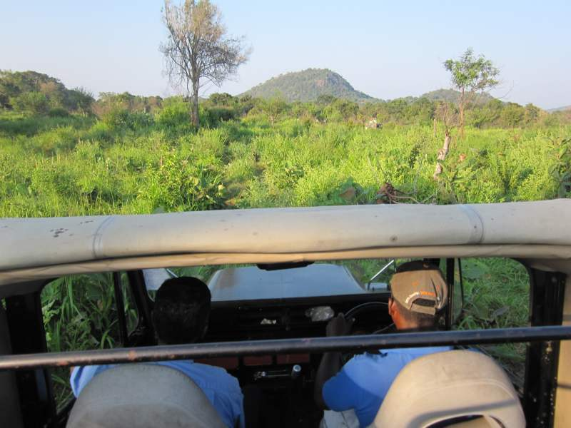 Jeep safari going through the forest